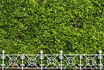 white metal railing in front of green bushes