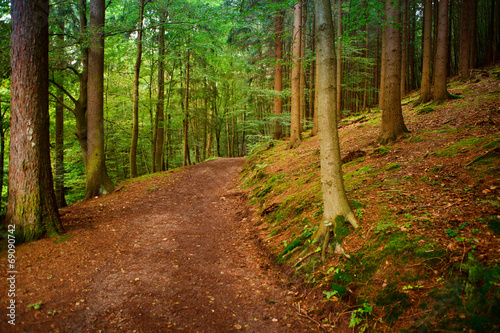 canvas print picture forrest