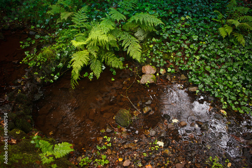 canvas print picture nature