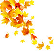 canvas print picture - Autumn falling leaves isolated on white background