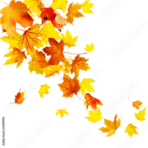 canvas print picture Autumn falling leaves isolated on white background
