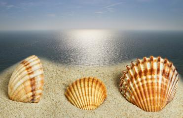 Shells at the sea.