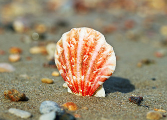 Shell on a sand.