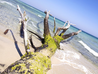 tree trunk on the beach by the sea