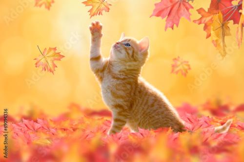canvas print picture Herbstkatze, Hebrstkätzchen