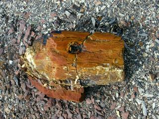 Окаменевшая древесина