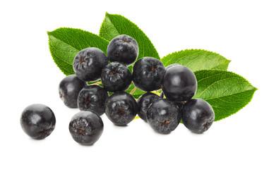 black chokeberry isolated on the white background