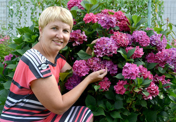 The happy woman of average years near a blossoming hydrangea in