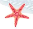 Starfish - 69096729