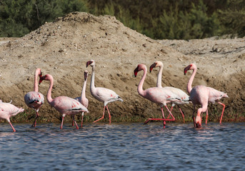 Flamingos near Swakopmund, Namibia