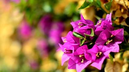 flores en dia ventoso