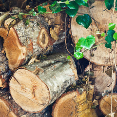 woodpile of old firewoods