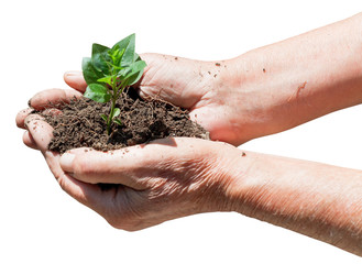 peasant handful with soil and green sprout