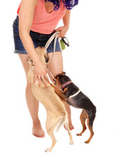 Woman patting her dog's.