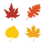 Fototapety Autumn leaves with stitches