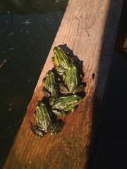 пять лягушек на доске