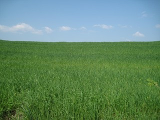 Verde coltivazione