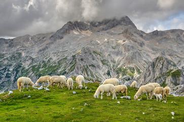 Sheep grazing on the pasture under mount Triglav