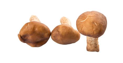 Edible mushroom over white background