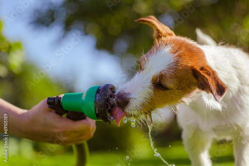 Leinwanddruck Bild dog drinks water, spray