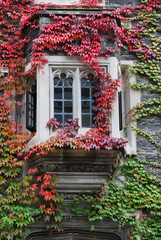 college building bay window with colorful ivy