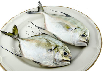 Fish (Selective Focus)
