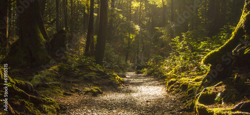 Foto op Canvas Bossen Rainforest Path