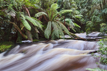 Tasmania Nelson Waterfall stream