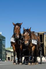 Лошади в упряжке