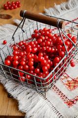 Red berries of viburnum in wire basket