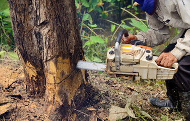 Man with chainsaw cutting the tree
