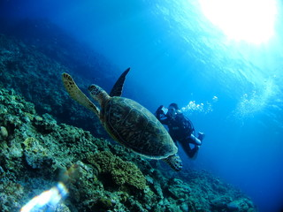 アオウミガメと女性ダイバー