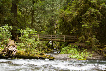 Nature Bridge end near Marymere Falls, Olympic National Park