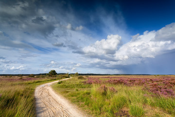 path through meadows and blue sky