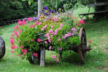 Carretto fiorito