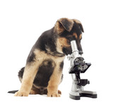Fototapeta Puppy and microscope