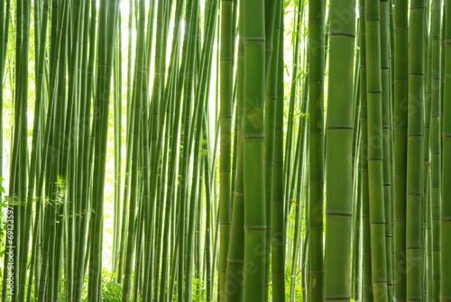In de dag Bamboe 緑の竹林