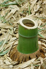 竹の伐り株