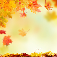 Falling autumn leaves with free space for text