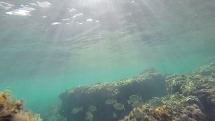 school of fish   reef