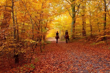 Riders in autumn forest