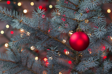Single Red Ornament hanging from pine tree with glowing lights