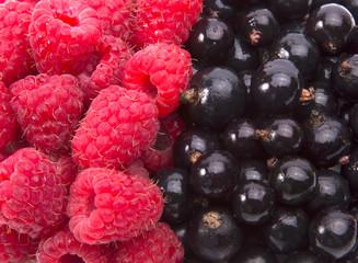Black currants and raspberries background