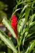 canvas print picture - Exotische Flora