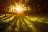 Fototapety Sunlight green forest in summer time