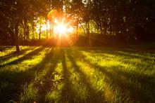 La lumière du soleil vert forêt en été