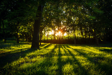 Sunlight green forest in summer time