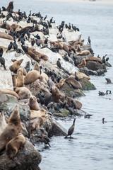 Sea Lions and Cormorants