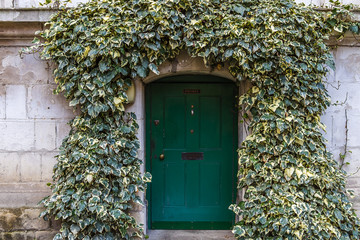 Old ivy wall with small green door in Westminster, London