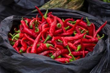 Fresh and organic chili peppers